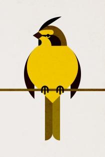 Yellow-Cardinal_1000